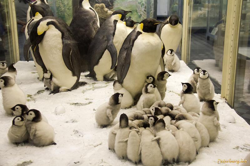 Санкт петербург зоологический музей билет цена как не купить поддельный билет на концерт